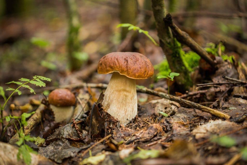 Значение грибов в природе и жизни человека - bio-learn.com