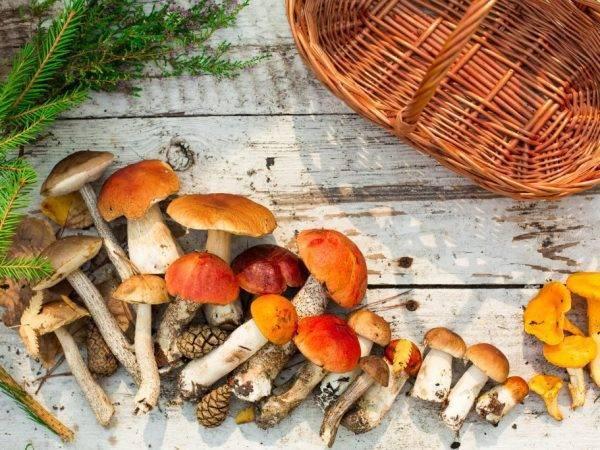 Рассказ про гриб подберёзовик для детей