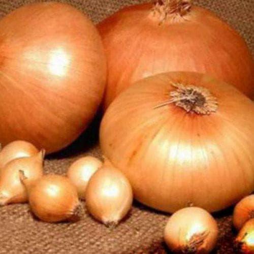 Лук чернушка - выращивание из семян за один сезон