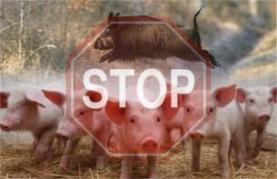 Профилактика и ликвидация африканской чумы свиней