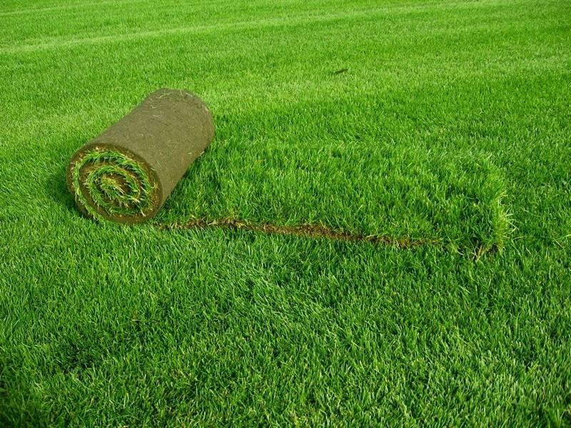 Газонная трава: как сажать ее своими руками, когда ее можно сеять
