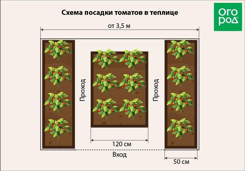 На каком расстоянии сажать помидоры: схема и инструкции