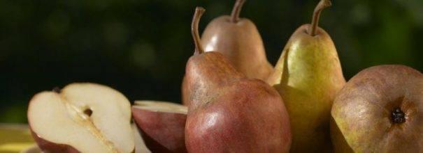 Груша мраморная: описание сорта, советы по выращиванию