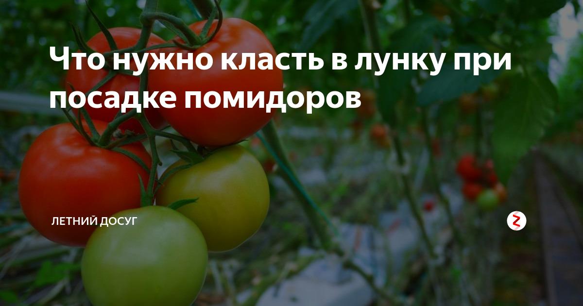 Что кладут в лунку при посадке томатов
