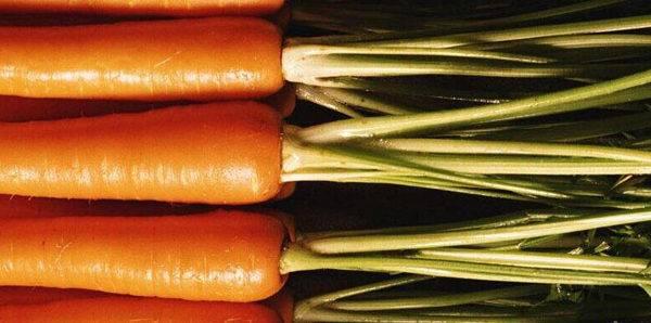 Радужная эволюция моркови: от фиолетовой к оранжевой