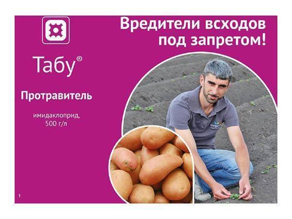 Борьба с проволочником на картофельном поле: максимальный результат при минимальных затратах