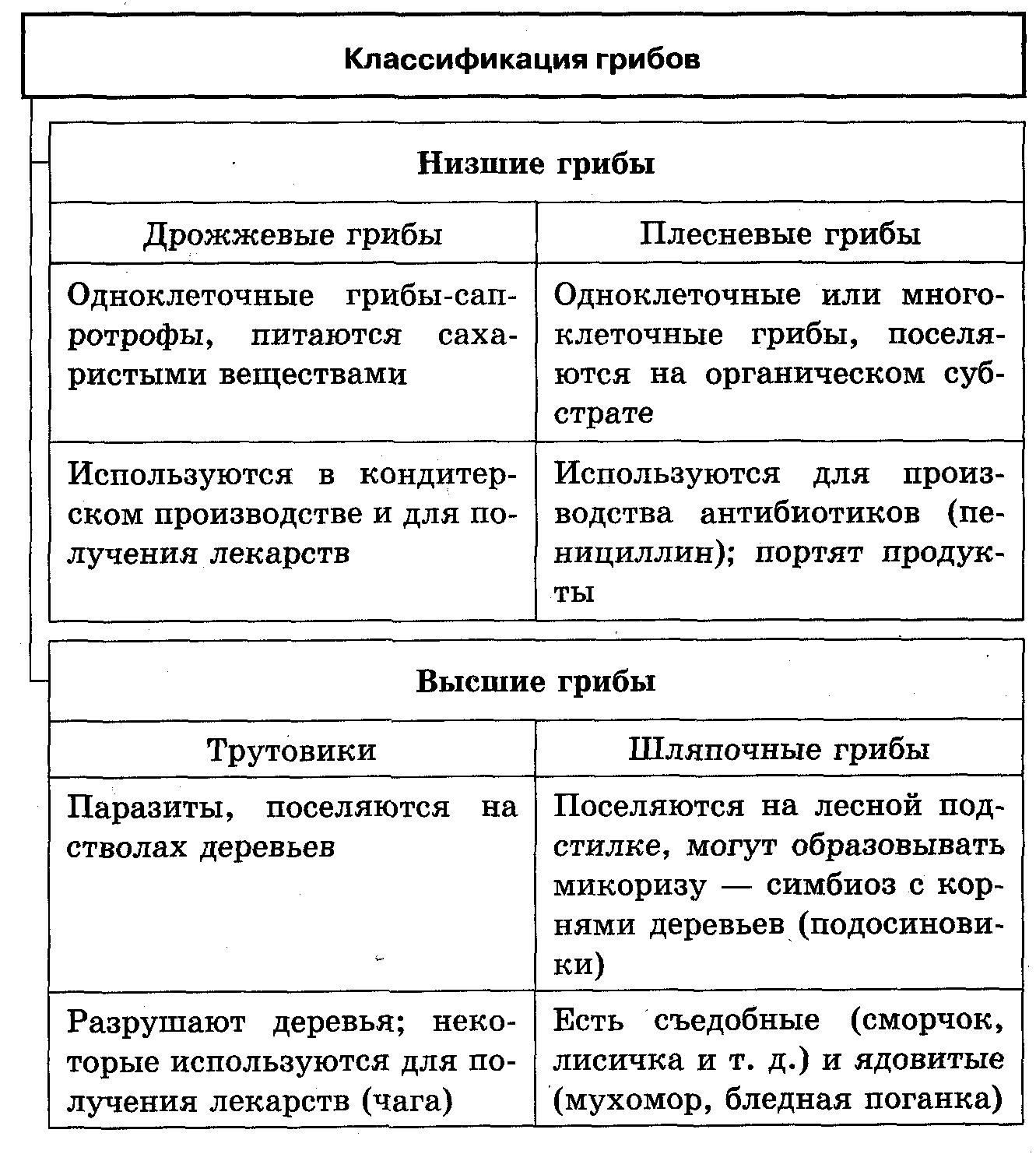 Грибы — большая медицинская энциклопедия