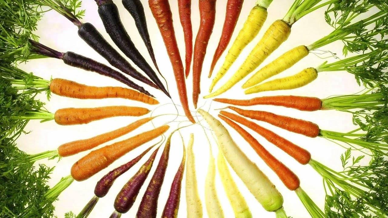 Почему у моркови сердцевина белая: большая и бледная, а не оранжевая или желтая внутри