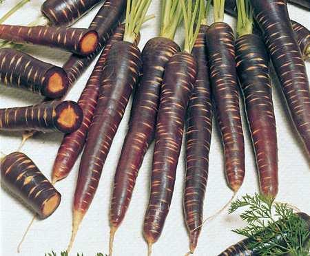 Что такое морковь? история, описание и характеристика этого растения, виды и интересные факты
