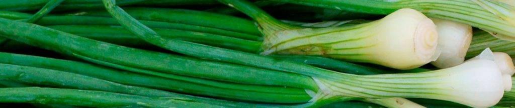 Семена лука на зелень: посадка и уход в открытом грунте, чернушка на перо (выращивание)