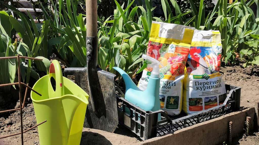 Подкормка баклажан: в открытом грунте, теплице, рассады, народными средствами