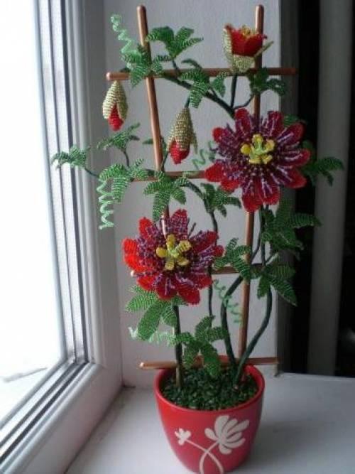 Пассифлора (страстоцвет)- выращивание и уход в домашних условиях