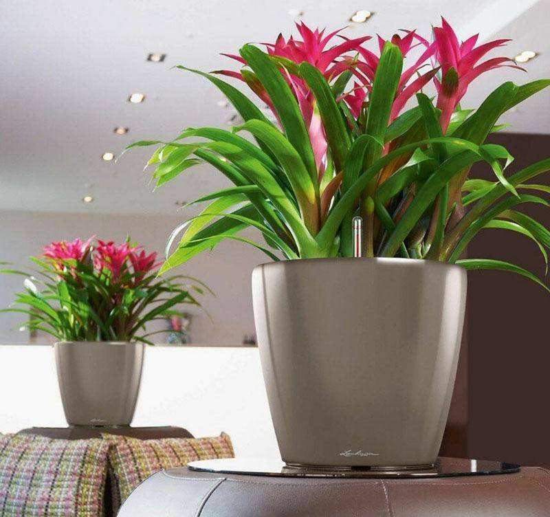 Топ-10 растений для озеленения офиса - hillford