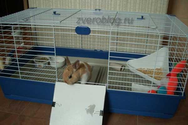 Карликовые кролики: уход и содержание в домашних условиях, отзывы, фото