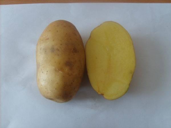Картофель уладар описание и характеристика сорта отзывы дачников с фото