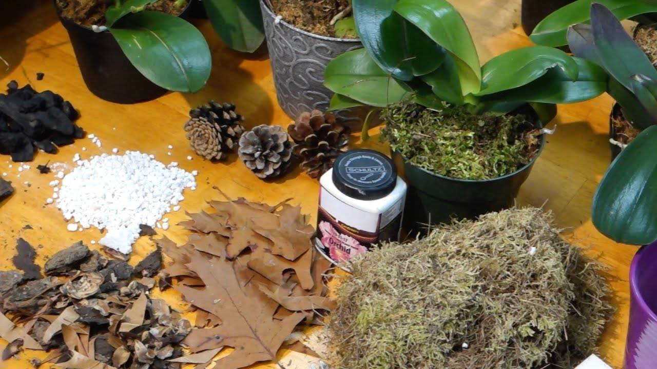 Подбор коры для орхидей: как обработать, приготовить, сосновая, пересадка