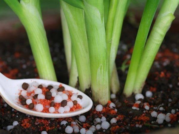 Удобрения для лука разных видов