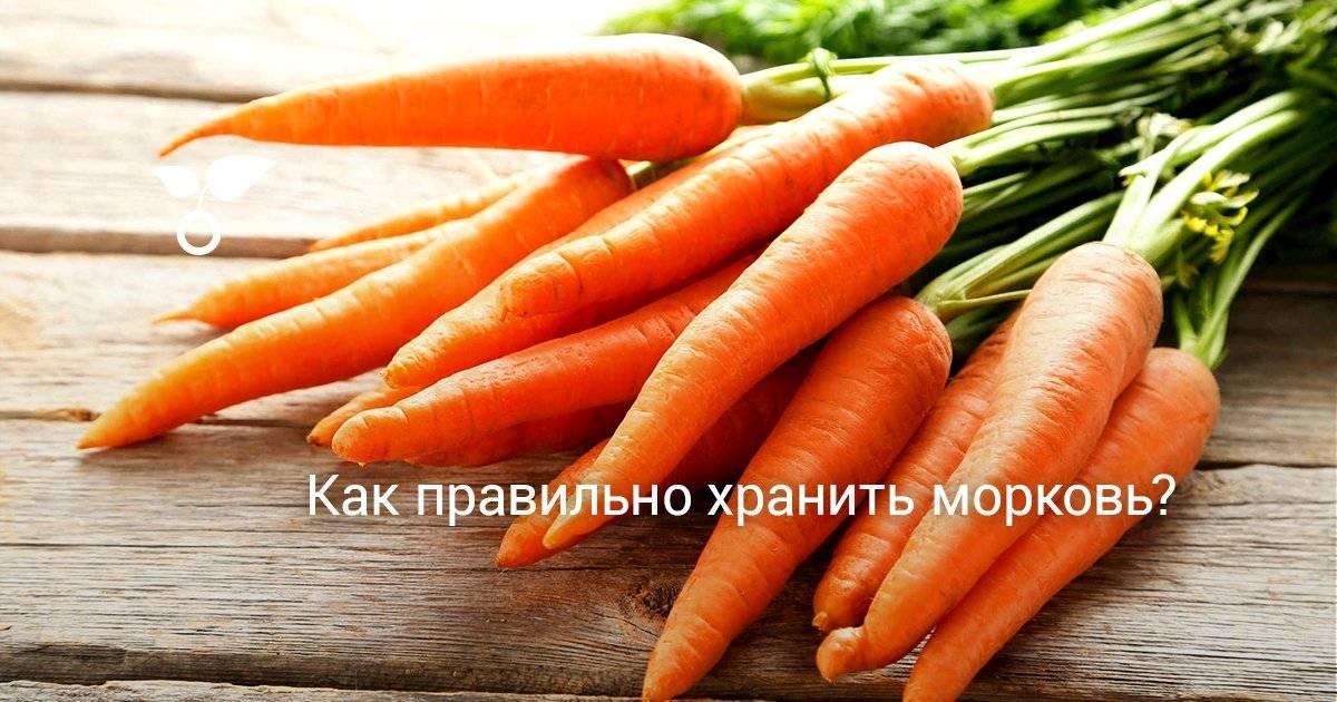 Сохранение моркови в домашних условиях