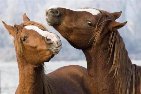 Особенности спаривания лошадей: условия, подготовка, способы