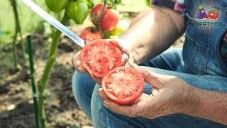 Опытные огородники рекомендуют — томат «розовый спам»: описание сорта и фото