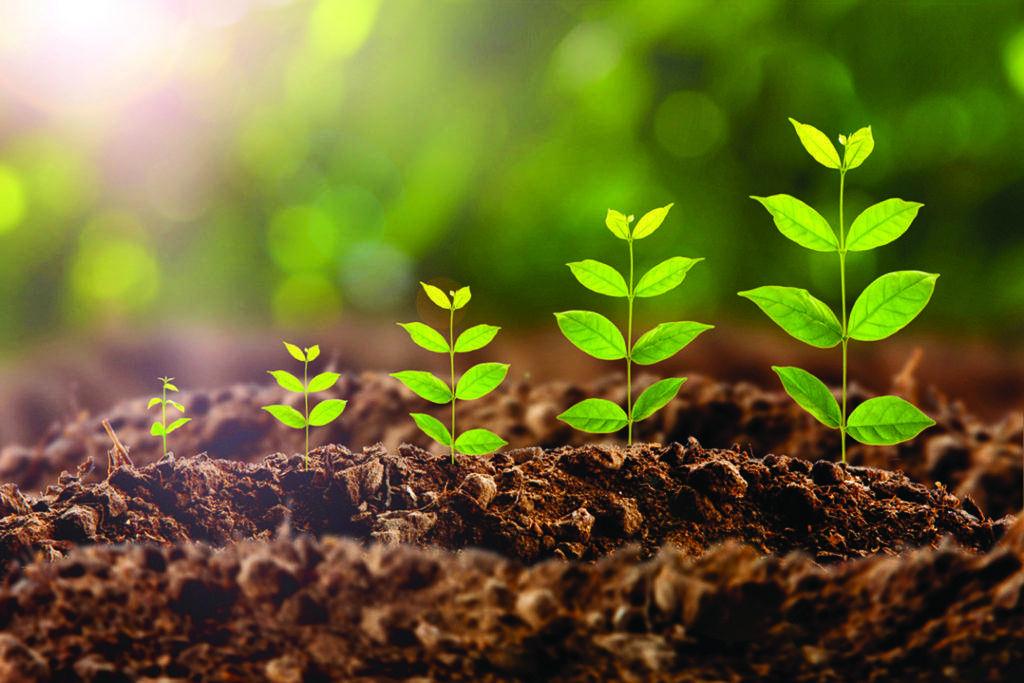 Стимуляторы роста растений в  москве