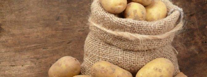 Самые урожайные сорта картофеля — более 500 кг с одной сотки