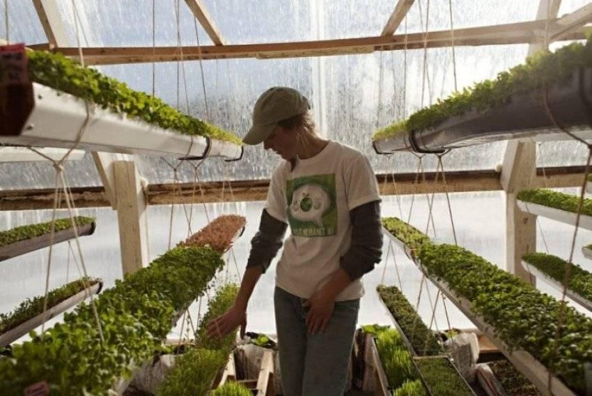 Выращивание зелени как бизнес – бизнес-план зелени с расчетами