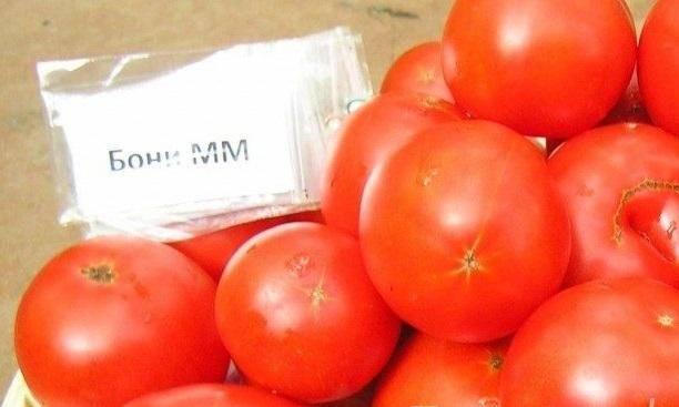 Томат бони м — описание сорта, урожайность, фото и отзывы садоводов