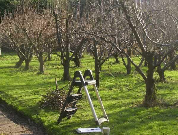 Обрезка плодовых деревьев - 70 фото, правила и рекомендации по увеличению урожайности