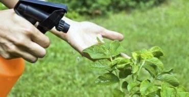 Препарат максим – защитный барьер и укрепление молодых растений