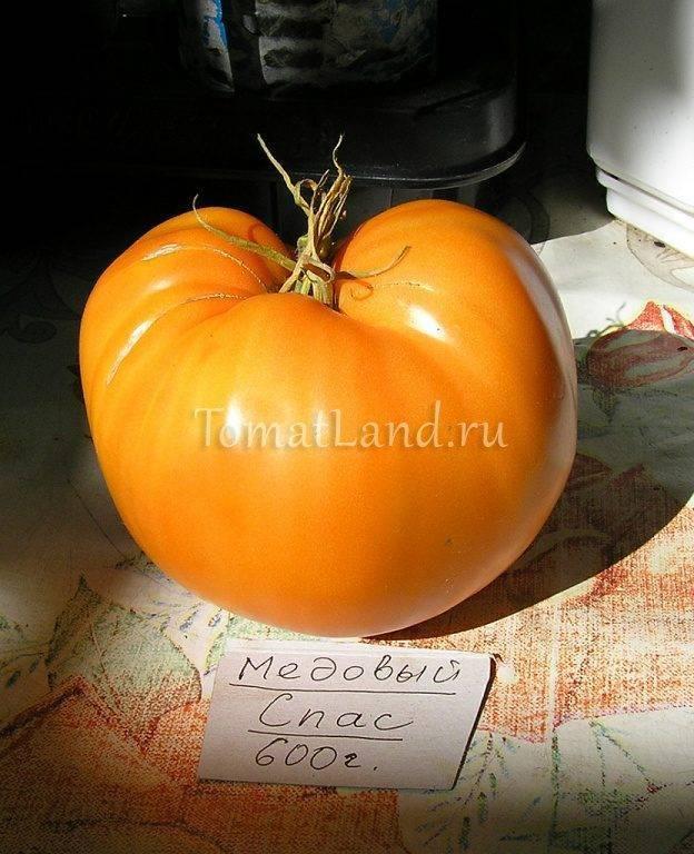 Особенности выращивания томата медовый спас