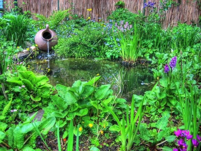 Водные растения для пресного пруда и водоема на даче - как подобрать?