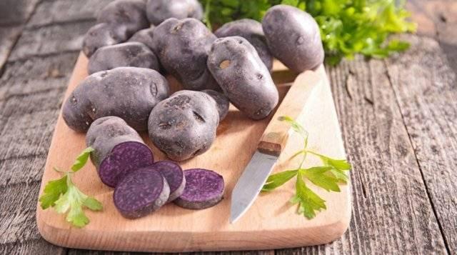 Фиолетовый картофель: полезные свойства, сорта синей картошки (перуанской) – фото, польза и вред, характеристики