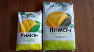 Лимон: посадка и уход