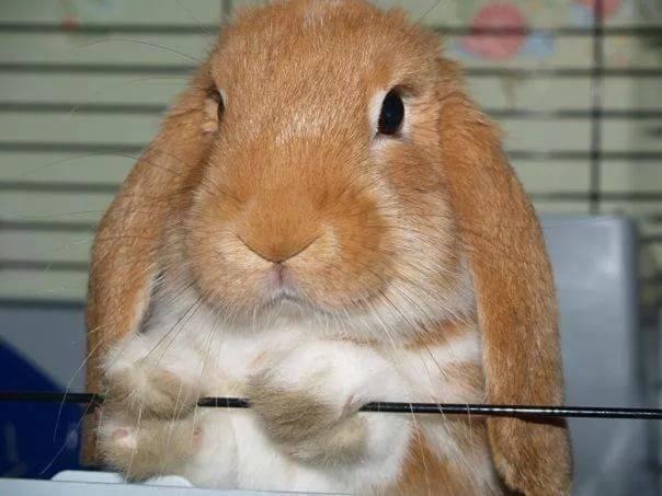 Кролики: современное разведение, выращивание и кормление | cельхозпортал
