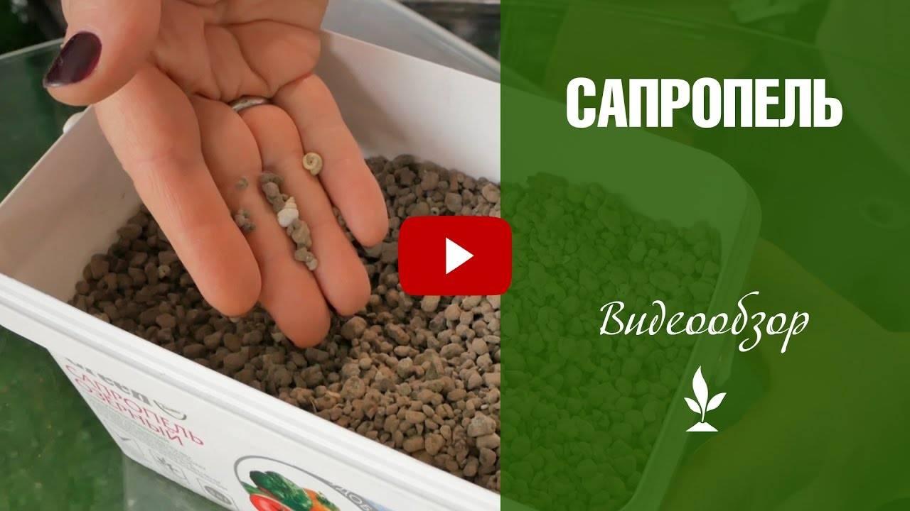 Сапропель: что это и как использовать, как подготовить донные отложения к внесению в грунт, рецепты с илом