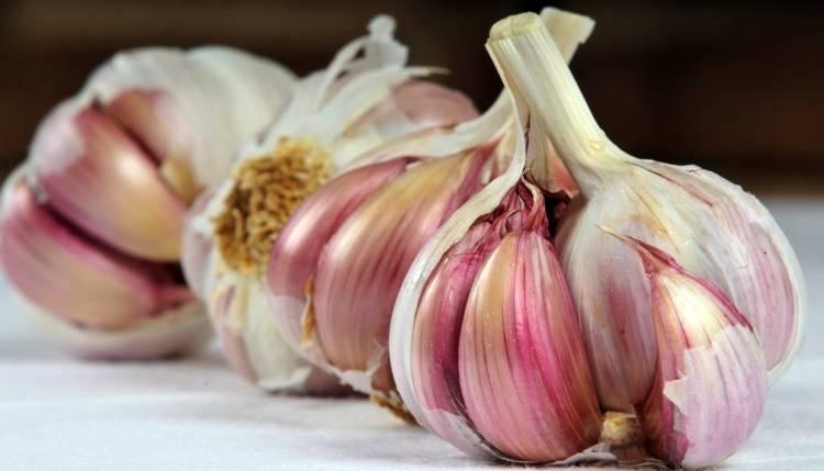 Чеснок комсомолец: описание и характеристика сорта, отзывы садоводов с фото