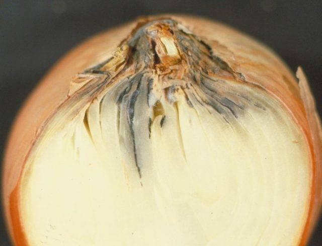 Мочеполовые инфекции: причины, симптомы, лечение и диагностика у мужчин и женщин