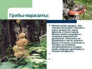 Грибы паразиты — общая характеристика, описание и фото - proinfekcii.ru
