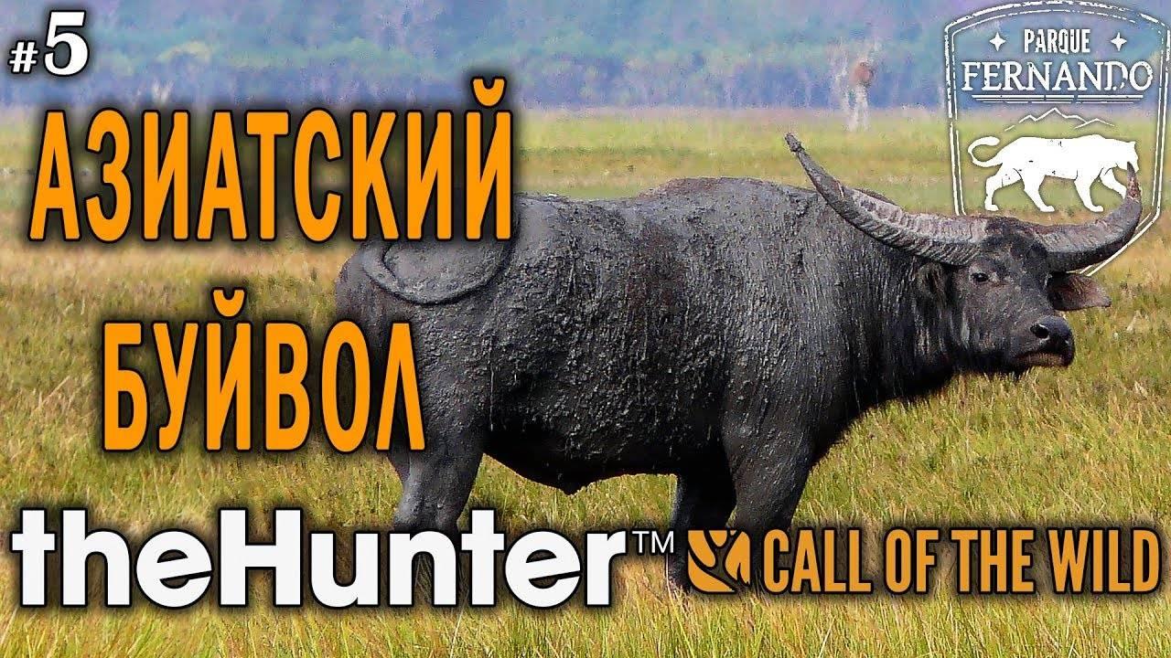 ᐉ индийский или азиатский буйвол: описание и характеристика - zooon.ru