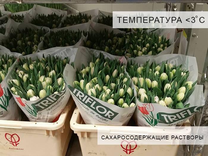Как сохранить луковицы тюльпанов до весны: без посадки в домашних условиях, когда нужно сажать