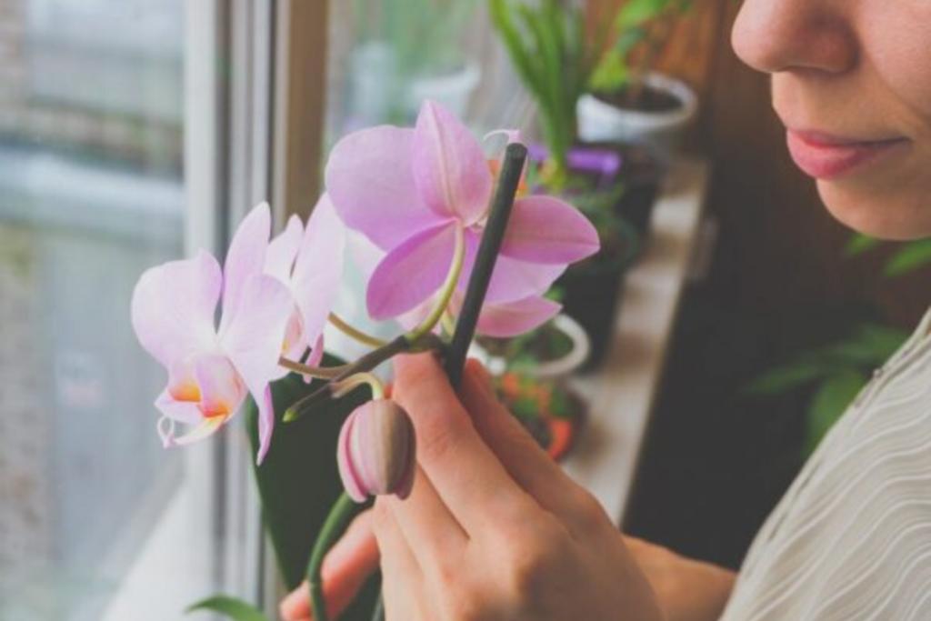 Болезни листьев орхидей и их лечение: фото и почему возникает эта проблема, как бороться с недугом, какие меры профилактики нужно предпринять? русский фермер