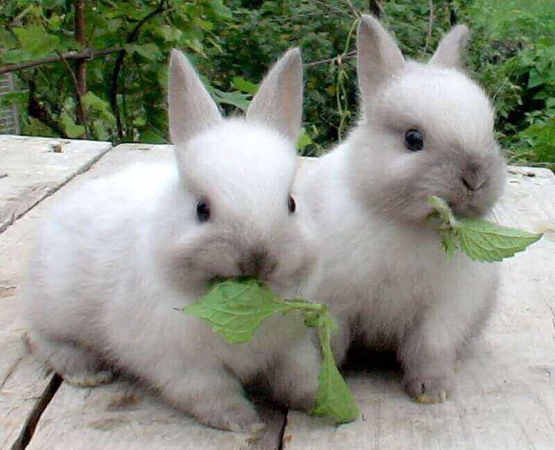 Кролики — интересные факты