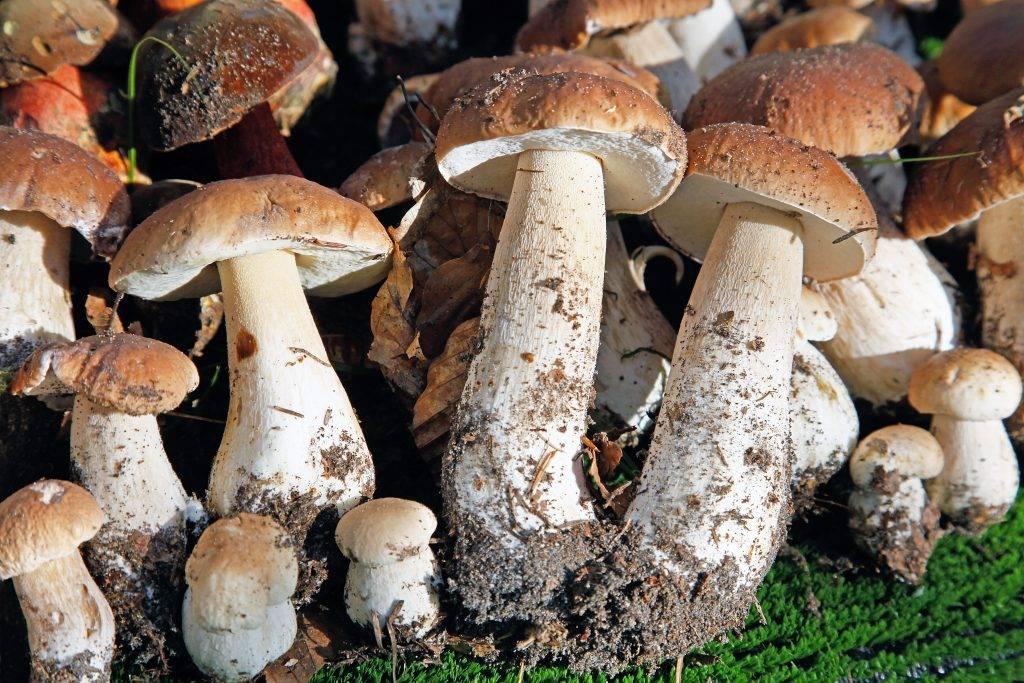 Топ 10 самых хищных растений и грибов в мире