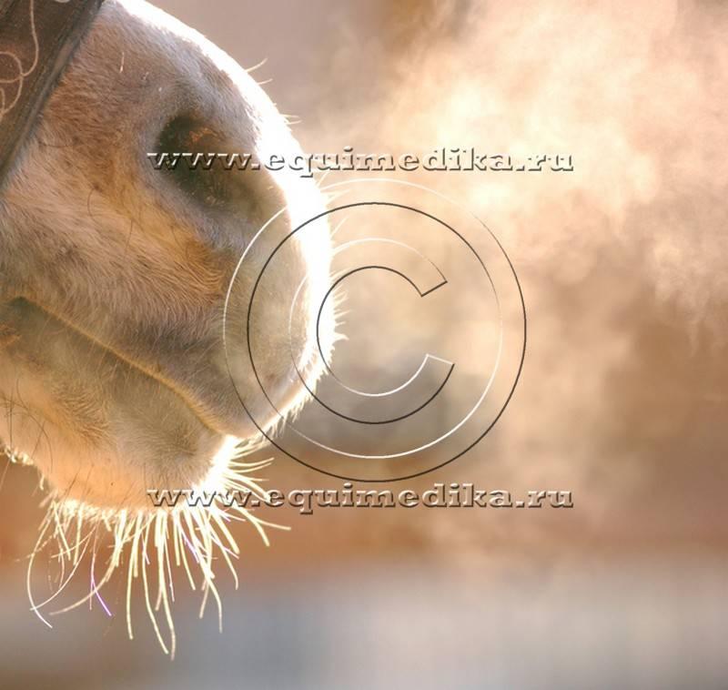 Мыт у лошади: описание болезни, причины и лечение