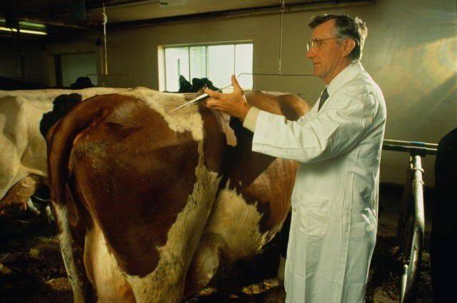 Какие бывают болезни у коров и быков