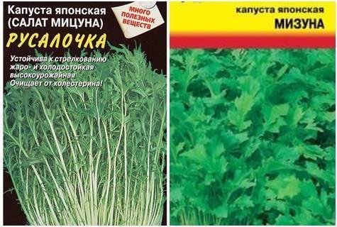 Японская капуста: описание сортов, выращивание и уход, полезные свойства