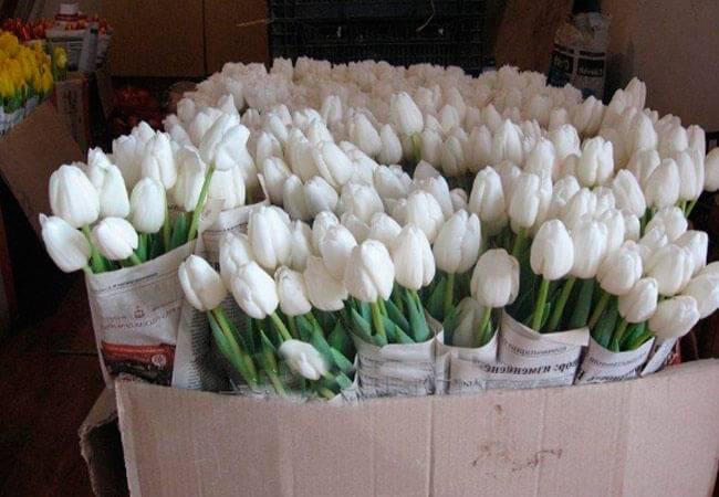 Как сохранить букет тюльпанов в вазе в дома: правила ухода и хранения