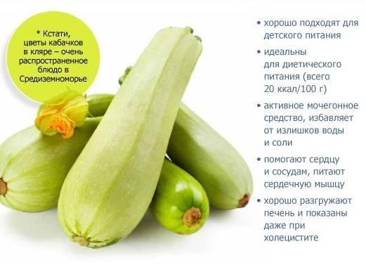 Кабачки: калорийность, польза и вред
