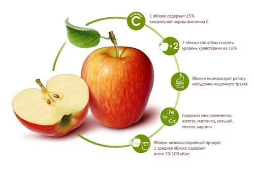 Яблоко: сорта, польза и калорийность | food and health